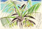Auf Mauritius, 20X30cm, Artist Pen, Buntstift auf  Papier