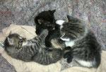 """01.06.2013, wir sind schon """"fast erwachsen"""" und Lucky und Bagira nehmen schon  manchmal feste Nahrung zu sich!"""