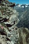Kleinste Blütenpolsteer auf dem Kleinallalin in über 3000 m Höhe