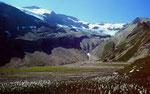Blühendes Wollgras im Rottal. Hinten Wildhorngruppe.