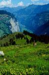 Aufstieg von der Busenalp zum Tanzbödeli. Blick auf das Lauterbrunner Tal. Links oberhalb der Felswand der Ort Mürren.