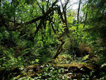 Urwaldähnlicher Bereich im Felsenkellergebiet im Fürther Stadtwald