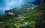 Bei der Alp Oberbärgli