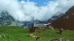 Oeschinenalp vom linken Aufstiegsweg von Kandersteg
