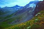 Aufstieg durch Blumenwiesen zum Ammertenpass