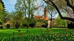 Tulpen- und Lilienbeet sowie Auferstehungskirche im Fürther Stadtpark