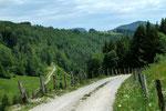 Der Güterweg führt hier durch Bergwald zur Lehneralm in der Holleiten hinab.
