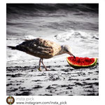 'Summer Snack' (shot at Jacobs Riis Beach, NYC) featured by Insta Pick Gallery: http://instagram.com/p/ctAHxxxwio/