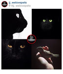 'le chat noir' [bottom left] (shot in brooklyn, ny) featured by jj we love pets: http://instagram.com/p/bpmD-8TFIb/