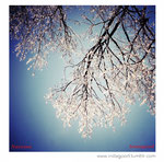 'canopy of ice' (shot in toronto, canada) featured by instagood: http://instagood.tumblr.com/post/71197464324/photo-by-navema-which-could-be-a-possible