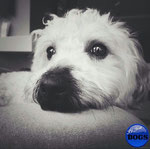 'pia' (shot in toronto, canada) featured by just dogs: http://instagram.com/p/kHZAImsc-2/