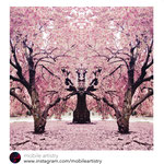 'brooklyn bodhi blossoms' (shot in prospect park in brooklyn) featured by mobile artistry: http://instagram.com/p/oRU5A9h59s/