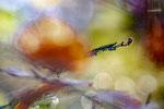 Herbstfarben III