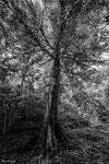 Baum in der Ermitage