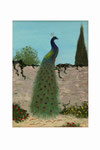 Paon (Acrylique sur toile - 22 x 17 )