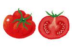 食品イラスト/トマト