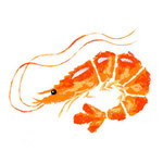 食品イラスト/えび