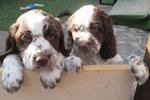 Olivia & Ophelia