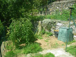 BAc à compost, coin aromates, et les pieds de tomates à partir du 10 août, vous pourrez les consommer