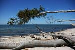 das Meer holt sich die Bäume