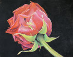 rote Rose, Pastell, 30 x 40 cm