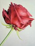 Rose_rot, Ölfarbe und Eitempera a. Lw, 80 x 60 cm