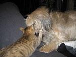 Spielstunde mit unserer Katze Como