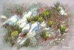 herbes du frioul