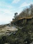 Baumfriedhof an der Steilküste