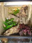 Vogelspinnenterrarium 30*40*40cm (L*T*H)