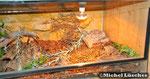 Halbtrockenterrarium 100*60*40cm (L*T*H)