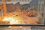 Skorpionterrarium 50*50*50cm (L*T*H)