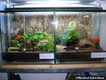 Vogelspinnenterrarium 40*40*40cm (L*T*H)