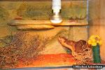 Detailansicht Wüsten-/Steppenterrarium 100*60*40cm (L*T*H)