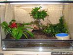 Vogelspinnenterrarium 60*40*40cm (L*T*H)