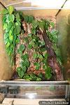 Vogelspinnenterrarium 40*40*60cm (L*T*H)