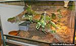 Halbtrockenterrarium 100*70*60cm (L*T*H)