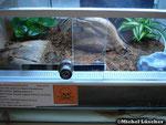 Skorpionterrarium 40*40*30cm (L*T*H)