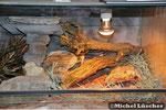Detailansicht Steppenterrarium 100*60*40cm (L*T*H)