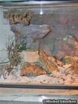 Detailansicht Wüsten-/ Felsenterrarium 80*50*40cm (L*T*H)
