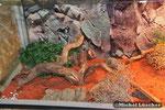 Detailansicht Wüstenterrarium 100*50*50cm (L*T*H)