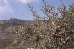 La Civitella
