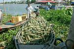 Ananaslieferung