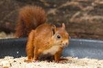 16 Eichhörnchen