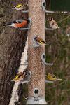 1 verschiedene Vogelarten