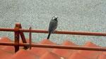 Le nid était sous notre fenêtre !