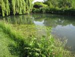 Les marais et les coulants (canaux)