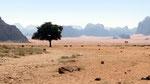 dans le désert du Wadi Rum