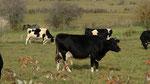Et le lait ? Non mais, y-a-t-il des gens de l'OMS qui ont déjà vu une vache ?