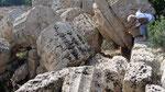 Ne pas toucher à Selinunte, Sicile